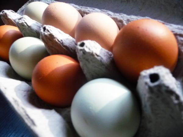 Non Organic Egg Next